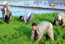 مستقبل الزراعة في مصر